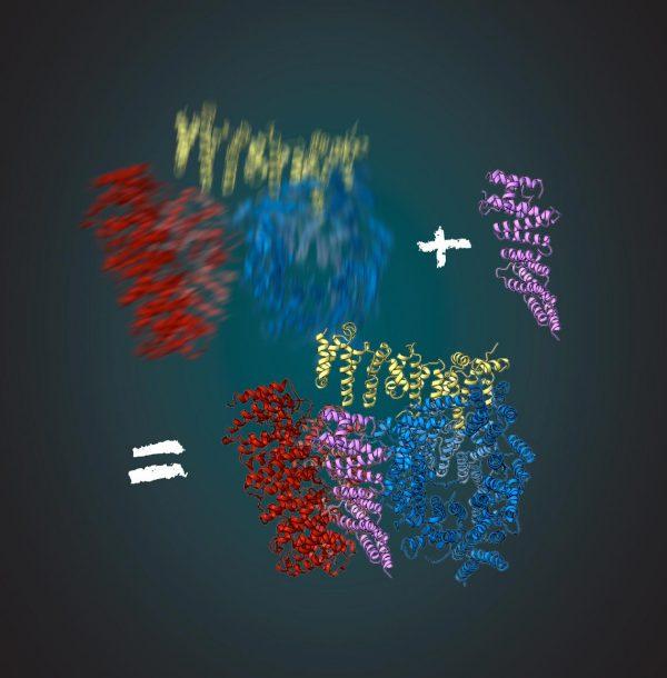Huntingtin-assoziiertes Protein HAP40, Illustration für Prof. Kochanek, Uni Ulm/Max-Planck-Institut München © 2018 Gabriele Stautner